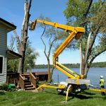 tree trimming contractors