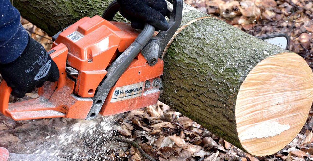 tree removal companies near me